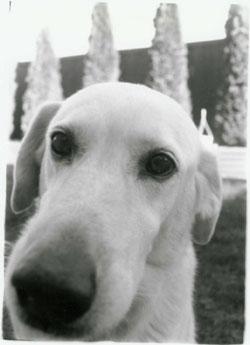 my neighbor's dog - Pete ::: >>>